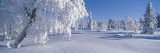 Winter Trees Sweden Wall Decal by  Panoramic Images