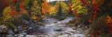 Stream with Trees in a Forest in Autumn, Nova Scotia, Canada Wall Decal by  Panoramic Images