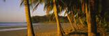 Palm Trees on the Beach, Samara Beach, Guanacaste Province, Costa Rica Wall Decal by  Panoramic Images