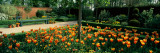 Tulips in a Garden, Springfields Garden, Lincolnshire, England Wall Decal by  Panoramic Images