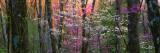 Virginia, Shenandoah National Park Wallstickers af Panoramic Images