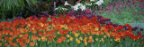 Close-up of Flowers in a Garden, Botanical Garden of Buffalo and Erie County, Buffalo, New York Wall Decal by  Panoramic Images