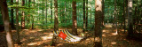 Hammock in a Forest, Baden-Wurttemberg, Germany Wall Decal by  Panoramic Images