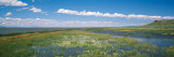 Wildflowers in Wetland, Malheur National Wildlife Refuge, Burns, Oregon, USA Wall Decal by  Panoramic Images