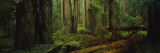 Trees in a Forest, Hoh Rainforest, Olympic National Park, Washington, USA Wall Decal by  Panoramic Images