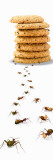 Ants Marching Towards and Away from a Stack of Cookies Wall Decal by  Panoramic Images