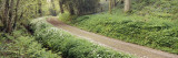 Road Passing Through a Forest with Wild Garlic and Bluebells, Exe Valley, Mid Devon, Devon, England Wall Decal by  Panoramic Images