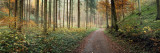 Road Passing Through a Forest, Baden-Wurttemberg, Germany Wall Decal by  Panoramic Images