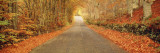 Autumn Road Scotland Wall Decal by  Panoramic Images