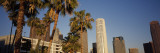View of Palm Trees in Front of Buildings, City of Los Angeles, California, USA Wall Decal by  Panoramic Images