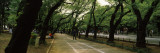 Trees Along a Road, Ueno Park, Taito, Tokyo Prefecture, Kanto Region, Japan Wall Decal by  Panoramic Images