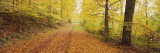 Road Covered with Autumnal Leaves Passing Through a Forest, Baden-Wurttemberg, Germany Wall Decal by  Panoramic Images
