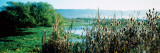 Plants in a Marsh, Arcata Marsh, Arcata, Humboldt County, California, USA Wall Decal by  Panoramic Images