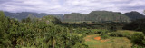 Trees with Mountain Range in Back, Valle De Vinales, Pinar Del Rio Province, Cuba Wall Decal by  Panoramic Images