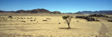 Horse Ranch on a Homestead, Namibia Wall Decal by  Panoramic Images