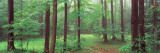 Trees in a Forest, Chestnut Ridge County Park, Orchard Park, Erie County, New York State, USA Wall Decal by  Panoramic Images