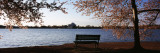 Park Bench with Jefferson Memoria in Background, Tidal Basin, Potomac River, Washington DC Wall Decal by  Panoramic Images