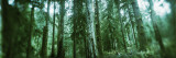 Trees in a Rainforest, Olympic National Park, Olympic Peninsula, Washington State, USA Wall Decal by  Panoramic Images