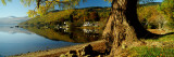 Tree at the Lakeside, Loch Tay, Highlands Region, Scotland Wall Decal by  Panoramic Images