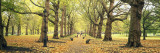 Trees Along a Footpath in a Park, Green Park, London, England Wall Decal by  Panoramic Images
