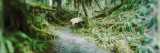 Trail in a Rainforest, Olympic National Park, Olympic Peninsula, Washington State, USA Wall Decal by  Panoramic Images