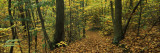 Trees in a Forest, Clamart, Paris, Ile-De-France, France Wall Decal by  Panoramic Images