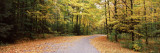 Road Passing Through Forest, Chestnut Ridge County Park, Orchard Park, Erie County, New York State Wall Decal by  Panoramic Images
