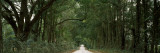Oak Trees Along a Dirt Road, Williston, Levy County, Florida, USA Wall Decal by  Panoramic Images