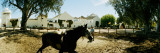 Horse Running in an Paddock, Gerena, Seville, Seville Province, Andalusia, Spain Wall Decal by  Panoramic Images
