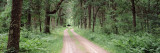 Dirt Road Passing Through a Forest, Sandhill Wildlife Area, Babcock, Wisconsin, USA Wall Decal by  Panoramic Images