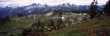 Wildflowers on Mountains, Mt Rainier, Pierce County, Washington State, USA Adhésif mural par  Panoramic Images