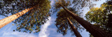 View of Trees, Exbury Gardens, New Forest, Hampshire, England Wall Decal by  Panoramic Images