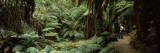 Woman Standing in a Forest, Temperate Rainforest, Tarra-Bulga National Park, Victoria, Australia Wall Decal by  Panoramic Images