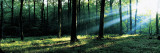 Forest Germany Wall Decal by  Panoramic Images