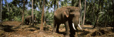 Indian Elephants in a Sanctuary, Punnathurkotta, Guruvayur, Kerala, India Wall Decal by  Panoramic Images