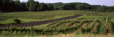 Road Passing Through Vineyards, Near Traverse City, Grand Traverse County, Michigan, USA Wall Decal by  Panoramic Images