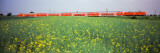 Commuter Train Passing Through Oilseed Rape Fields, Baden-Wurttemberg, Germany Wall Decal by  Panoramic Images