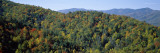 View of a Forest, Cataloochee, Great Smoky Mountains National Park, North Carolina, USA Wall Decal by  Panoramic Images