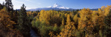 Cottonwood Trees in a Forest, Mt Hood, Hood River, Mt. Hood National Forest, Oregon, USA Wall Decal by  Panoramic Images