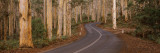 Road Passing Through Forest, Boranup Forest, Leeuwin-Naturaliste National Park, Australia Wall Decal by  Panoramic Images