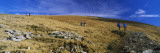 Hikers Walking on a Landscape, Helvellyn, English Lake District, Cumbria, England Wall Decal by  Panoramic Images