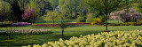 Tulip Flowers in a Garden, Sherwood Gardens, Baltimore, Maryland, USA Wall Decal by  Panoramic Images