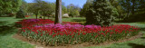 Azalea and Tulip Flowers in a Park, Sherwood Gardens, Baltimore, Maryland, USA Wall Decal by  Panoramic Images