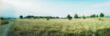 Trees in a Field, Discovery Park, Seattle, Washington State, USA Wall Decal by  Panoramic Images
