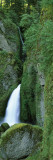 Waterfall in a Forest, Columbia River Gorge, Oregon, USA Wall Decal by  Panoramic Images