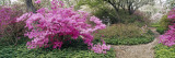 Azalea Flowers in a Garden, Garden of Eden, Ladew Topiary Gardens, Monkton, Baltimore County Wall Decal by  Panoramic Images