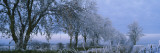 Frost on Trees, Staxton Carr Lane, North Yorkshire, England Wall Decal by  Panoramic Images