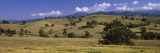 Gum Trees in a Farm, Snowy Mountains Highway, New South Wales, Australia Wall Decal by  Panoramic Images