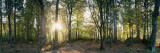 Trees in a Forest, Black Forest, Freiburg Im Breisgau, Baden-Wurttemberg, Germany Wall Decal by  Panoramic Images