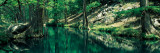 Stream in a Forest, Honey Creek, Texas, USA Wall Decal by  Panoramic Images